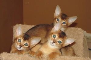 Kittens 7 weeks