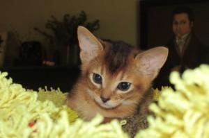 Kitten on Sunflower